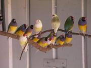 Bird Sale